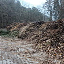 Sopot ukarany za zbieranie odpadów zielonych w lesie