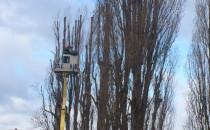 Pielęgnacja czy dewastacja drzew na Dolnym...