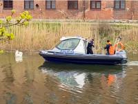 Policja próbowała odłowić rannego łabędzia