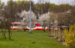 Bezpłatny tramwaj  dla kierowców rozwiąże problem z parkowaniem w Brzeźnie?