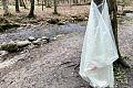 Niewidzialna ręka wiesza worki na śmieci na drzewach w lesie