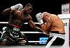 Polscy bokserzy bez litości dla rywali