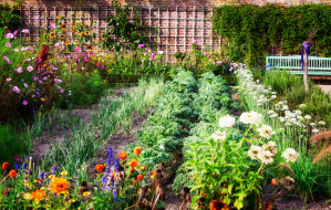 W pandemii uprawiamy rośliny. Pomysł na mały ogródek