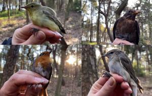 Akcja Bałtycka na Helu. Ptaki przyfrunęły do Polski