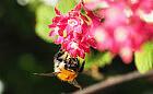 Niezwykły świat pszczół. Zobacz, co dobrego robią