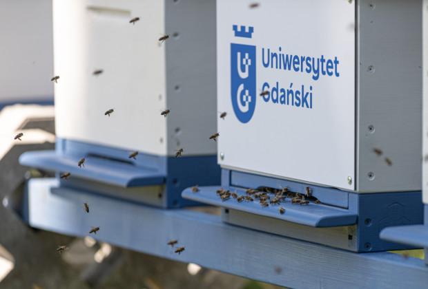 """Na UG zamieszkało sześć pszczelich rodzin. """"Bez zapylaczy zniknie 76 proc. żywności"""""""