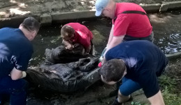 Materac, opony i inne śmieci wyłowione z rzeki w Gdyni