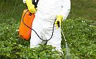 Opryski przeciw owadom... i ptakom. Pestycydy szkodzą nam wszystkim