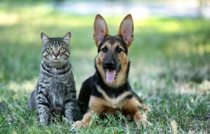 Głosuj na projekty BO dla zwierzaków w Gdyni