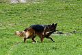Psy bez smyczy. Problem znany i... ignorowany