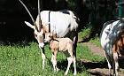 Wyjątkowy noworodek w gdańskim zoo
