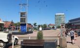 Jest projekt zasadzenia nowych drzew w centrum Gdańska