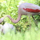Pelikany i flamingi wróciły na wybieg. Pawilon ptaków i gadów w zoo otwarty