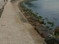 Ciało mężczyzny w wodzie przy falochronie w Gdyni