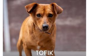 Tofik - czy ma szansę na nowe lepsze życie?
