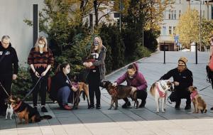 Sopocki lokal pomaga bezdomnym zwierzakom. Akcja trwa do 13 lipca