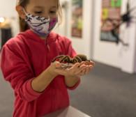 Wystawa pająków i skorpionów. Przełam obawy i poznaj egzotyczne zwierzęta