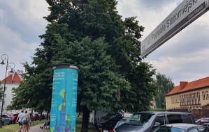 """""""Zielony mur"""" drzew wzdłuż Podwala Staromiejskiego"""