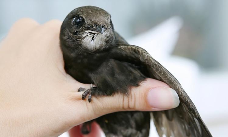 Spacery ornitologiczne w Sopocie. Weź udział 1 i 5 sierpnia