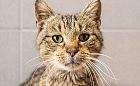 Koty zapraszają na dzień otwarty w Sopotkowie 8 sierpnia