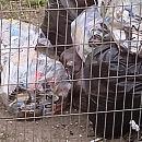 Szczurzy problem w centrum Wrzeszcza
