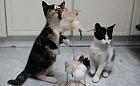 Petra i Mania - kocie dzieci w pakiecie szukają domu