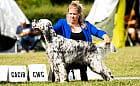 Wystawa psów w Sopocie. Ponad 2 tys. psów na ringach