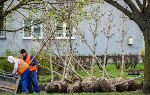 Posadzą jesienią ponad 300 nowych drzew