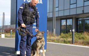 Luna przeszła na emeryturę. Policyjny pies spędzi ją ze swoim opiekunem