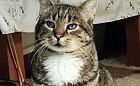 Szary: zabrany z działek, na których krzywdzono koty