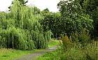 Specjaliści ds. drzew poszukiwani. Wolne etaty w nowym Dziale Zieleni