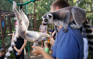 Lemury, strusie i węże. Oglądaj zwierzaki w okolicach Trójmiasta