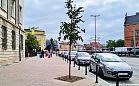 Drzewa zamiast donic na Hucisku. Cztery lipy drobnolistne nasadzono w gruncie