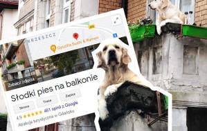 """""""Słodki pies na balkonie"""" atrakcją turystyczną"""