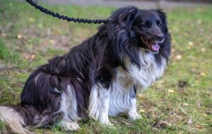Psy z pseudohodowli trafiły do Sopotkowa