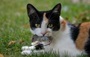 """Kot wolno żyjący nie jest """"dziki"""". Apel fundacji i stowarzyszeń"""