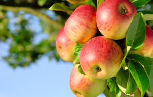 Światowy Dzień Jabłka 2021. Dlaczego warto je jeść?