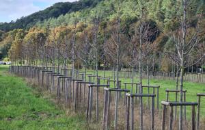 Zły stan kilkuset drzew na dawnym boisku w Oliwie