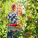 Okiem dietetyka: czy jedzenie ekologiczne jest zdrowe?