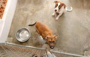 Piesek Puszek. Firmy i klienci wspomagają bezdomne psy