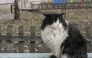 Dyskusja o jakości karmy dla bezdomnych kotów. Kto zawinił?