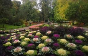 Ozdobią Gdańsk czterema tysiącami kwiatów