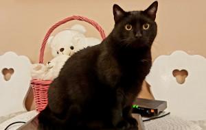 Kitty: maltretowana kotka szuka domu. Adoptuj