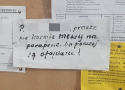 """""""Nie karmić mew, bo parapety są ufajdane"""". Sąsiedzki spór o dokarmianie zwierząt"""