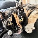 Przepiękna kotka Mamitka źle znosi pobyt w schronisku