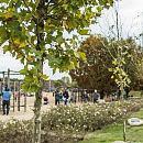 W weekend posadź drzewo dla swojego potomka