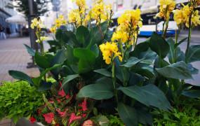 Gdynia rozdaje kwiaty za darmo