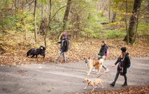 Spotkaj psy z Promyka na spacerze. Może któryś będzie twój?