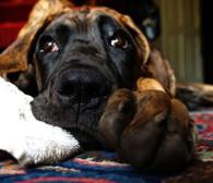 W Sylwestra pomyśl o swoim psie i kocie
