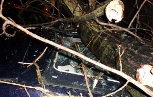 Drzewo spadło na cztery samochody